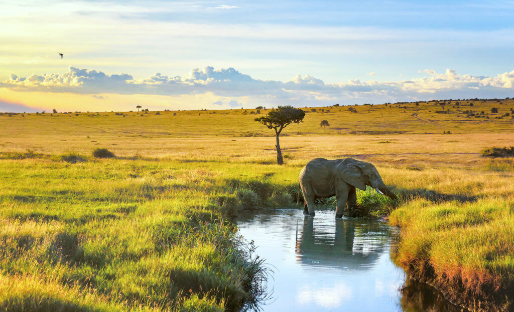 Elephant cooling down in the water in Masai Mara resort, Kenya
