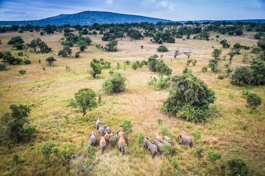 Conservation: Elephants in the African Landscape