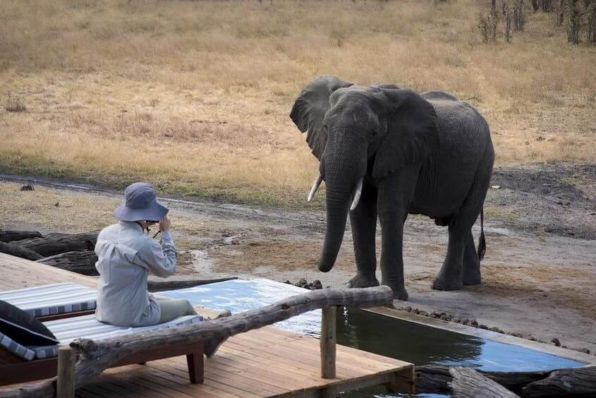 somalisa expeditions hwange national park zimbabwe close encounters with elephants at the elephant pool luxury safari lodge african bush camps