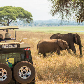 Africa-Safari-Vehicle-Guests-Elephant